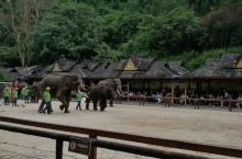 大象🐘互动