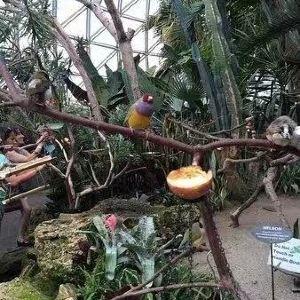 布勒德尔花鸟温室园旅游景点攻略图