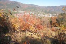 看香山红叶