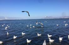 11月23日洱海、南昭风情岛