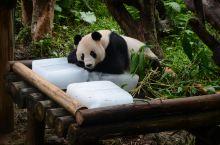 最实在的广州长隆野生动物园攻略在这里!