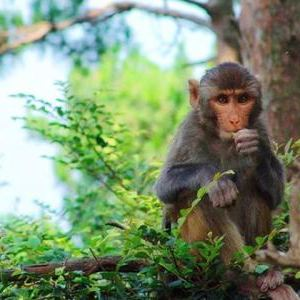 猴岛旅游景点攻略图