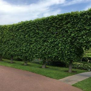 爱丁堡皇家植物园旅游景点攻略图