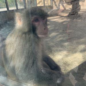 东营动物园旅游景点攻略图