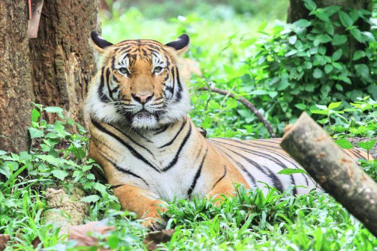 馬來西亞國家動物園