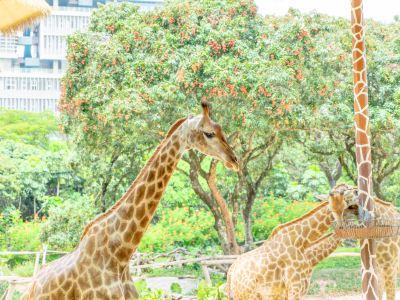 선전 야생동물원(심천 야생동물원)