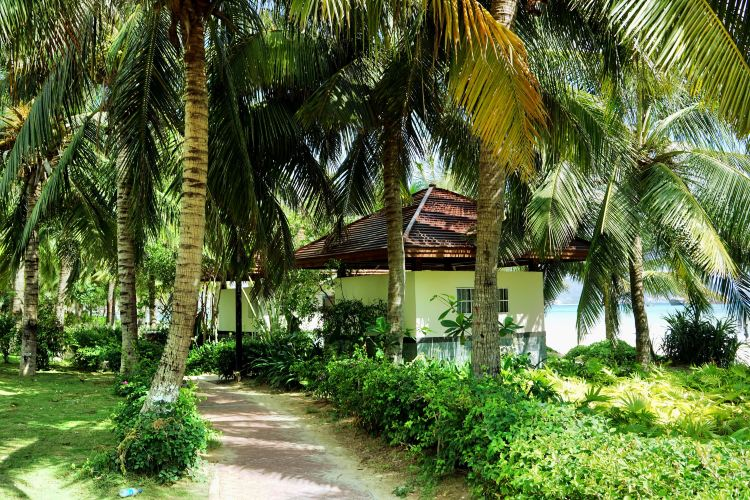 Coconut Dream Corridor