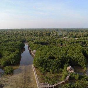 Omagieca Mangrove Garden旅游景点攻略图