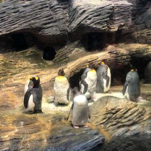 安特卫普动物园旅游景点攻略图