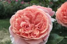 Rose Garden,饭后好去处