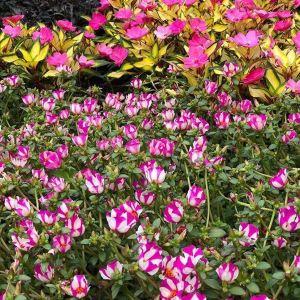 蒙特利尔植物园旅游景点攻略图