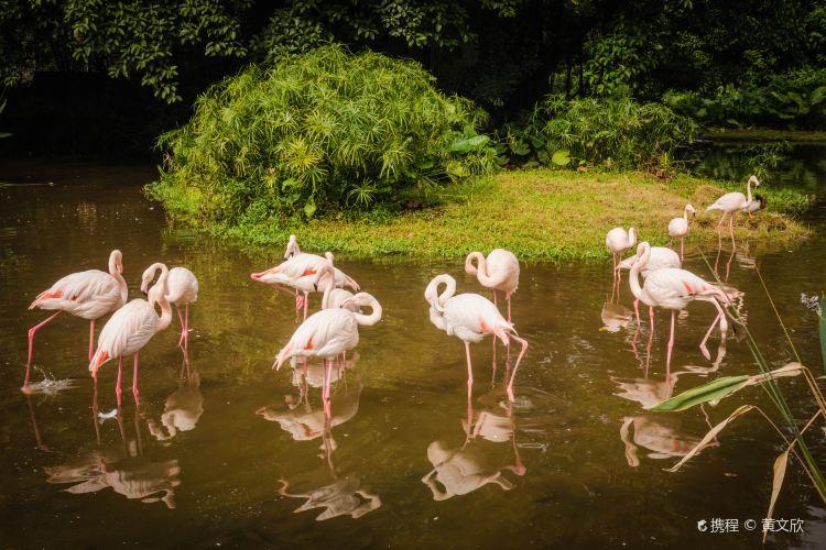 Guangzhou Zoo2