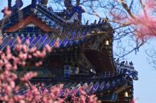 天下第一梅山!边赏梅花边游览古迹,这个春季摄影胜地正当季!