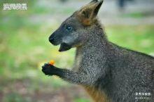 我在澳洲拍到的动物(一小部分)  胥秀萍摄影