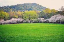 周边游 杭州太子湾赏个早樱 每年都要去日本赏樱有点吃力了,樱花季得抢房抢车票抢景点机位,走在景点又是