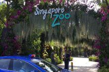 新加坡动物园:动物和人类最好的文明世界 新加坡动物园,不愧是世界最佳动物园之一,硬件和服务都非常好。