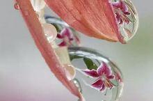 再看看花花世界