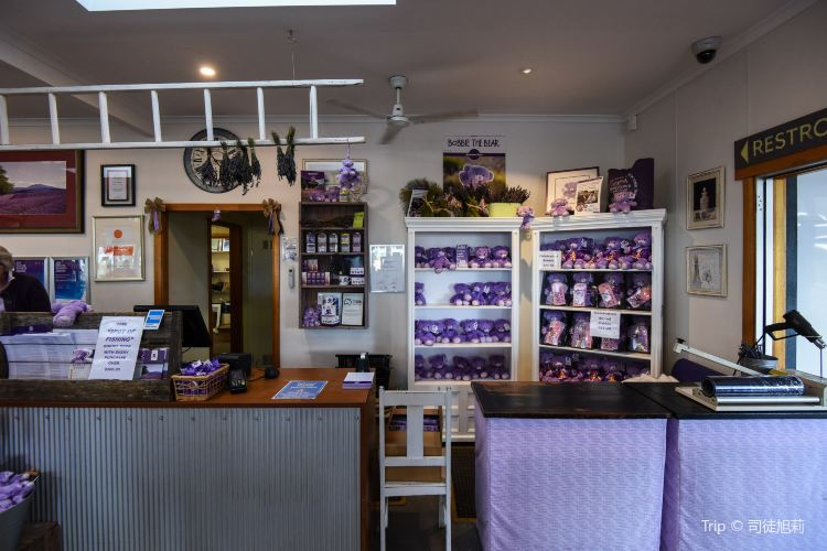 Bridestowe Lavender Estate3