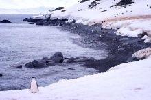 南极那么大 登陆规矩记得牢