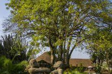 内罗毕最美的花园酒店
