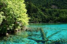 初夏时节的九寨沟(二)          畅游在初夏时节的九寨沟,那一泓泓碧池,清澈见底,在明亮的阳