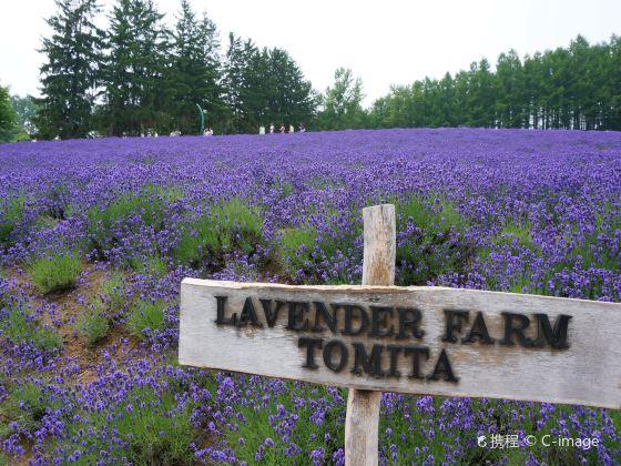 Farm Tomita Lavender East