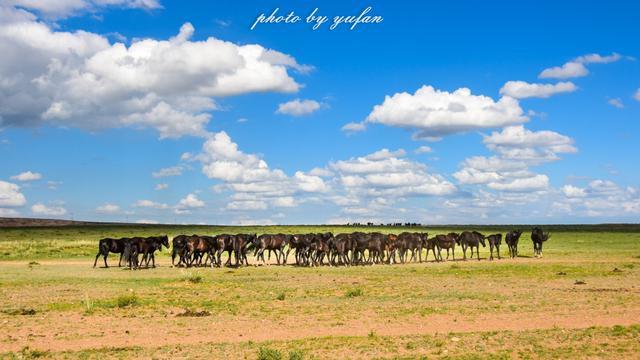草原上的精灵——阿巴嘎黑马,它的铁蹄征服过欧亚大陆