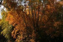 东兴——古榕部落 【古榕部落】 位于东兴市竹山村榕树头自然村,三面环海,是大清国一号界碑景区中美丽的