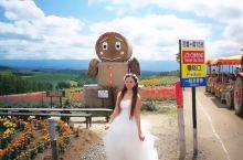 水菱环球之旅の北海道四季彩の丘