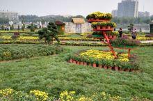廊坊文化艺术中心的菊花节