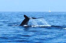驰骋印度洋,蓝鲸伴我行!