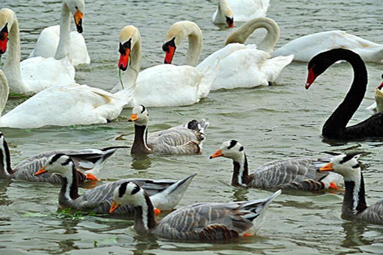 天鵝湖動物基地