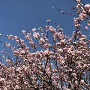 天适樱花悠乐园旅游景点攻略图