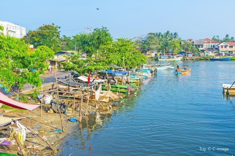Negombo Lagoon1
