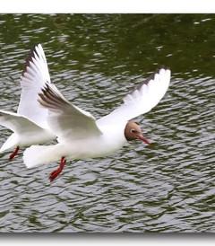 [克莱佩达游记图片] 波罗的海四国游(35):水上表演