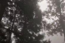 迷雾中的阿里上,还未睡醒……