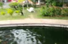 极乐寺之观音像和放生池