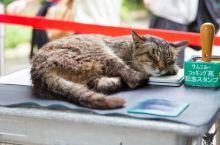 世界最怪的岛屿,被50000只猫咪霸占,这些猫岛就在日本~