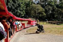 在澳大利亚乘坐小火车