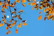 叶色渐暖,层林渐染,山秋意浓