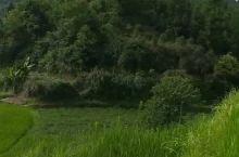 实拍八月份绿油油广东蛇离梯田美景