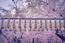 樱你而美—平野神社