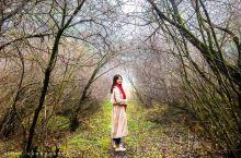 深入雾中原始森林秘境中,可以清晰听见自己的呼吸声