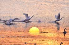 天鹅在这晒太阳吃小鱼的地方叫烟墩角