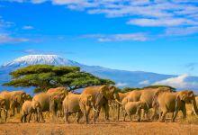 坦桑尼亚+肯尼亚自然风情8日野奢之旅