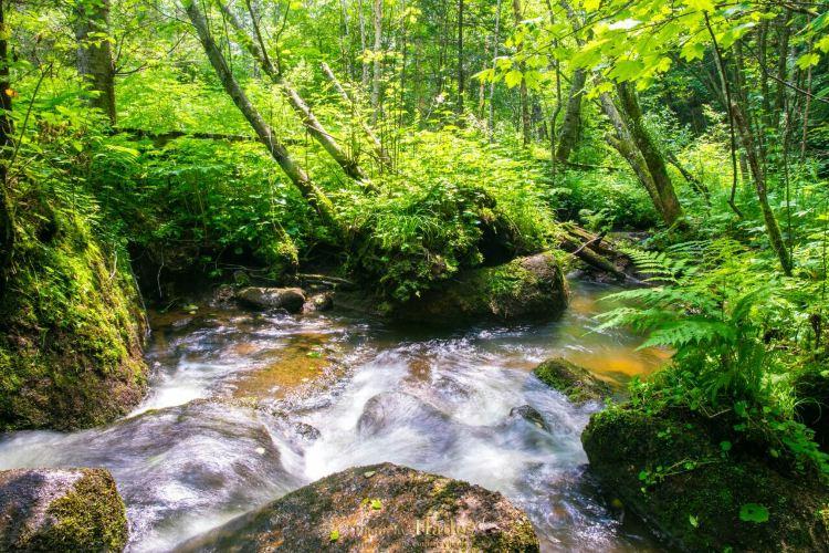 五營國家森林公園1