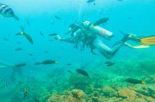 #元旦去哪玩#不用会潜水,一样可以不湿头发的下海底看海星