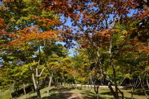 Chuncheon-si,Recommendations