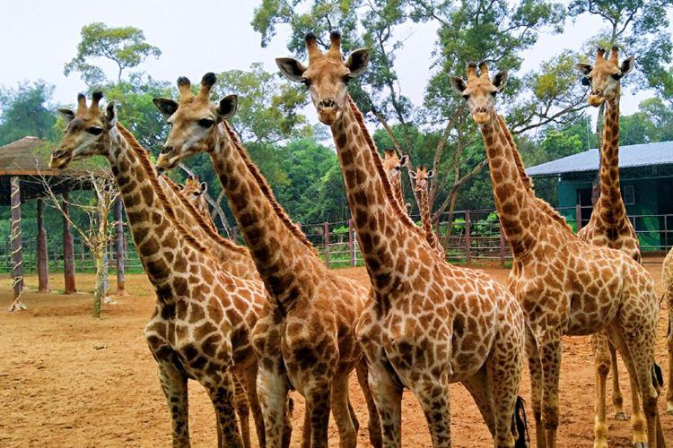 海南熱帶野生動植物園4