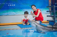 与海豚共舞